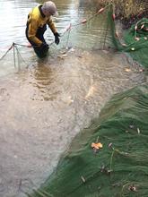 Sample netting Bottom Lake