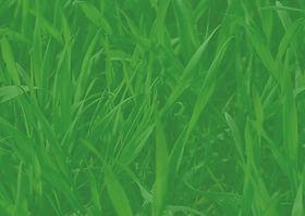Grass Background - Image.jpg