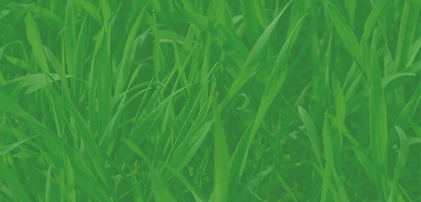 Grass Background - Website.jpg