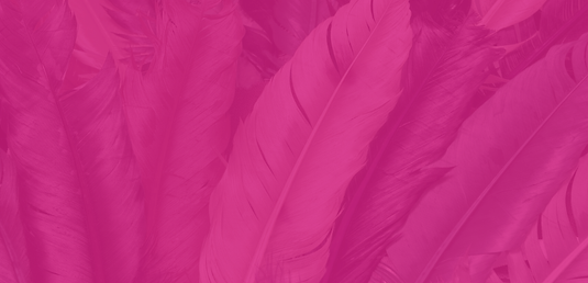 Pink Feather Background 2.png