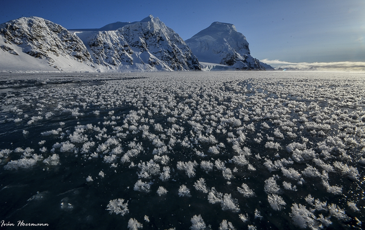 Flores de hielo