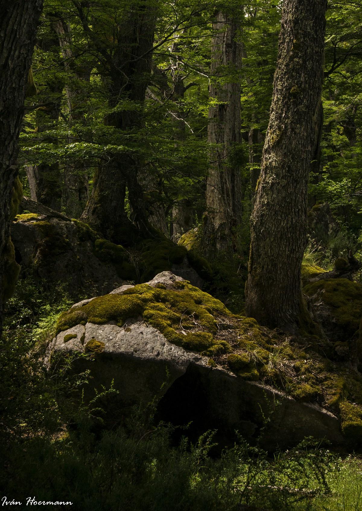 La piedra en el bosque