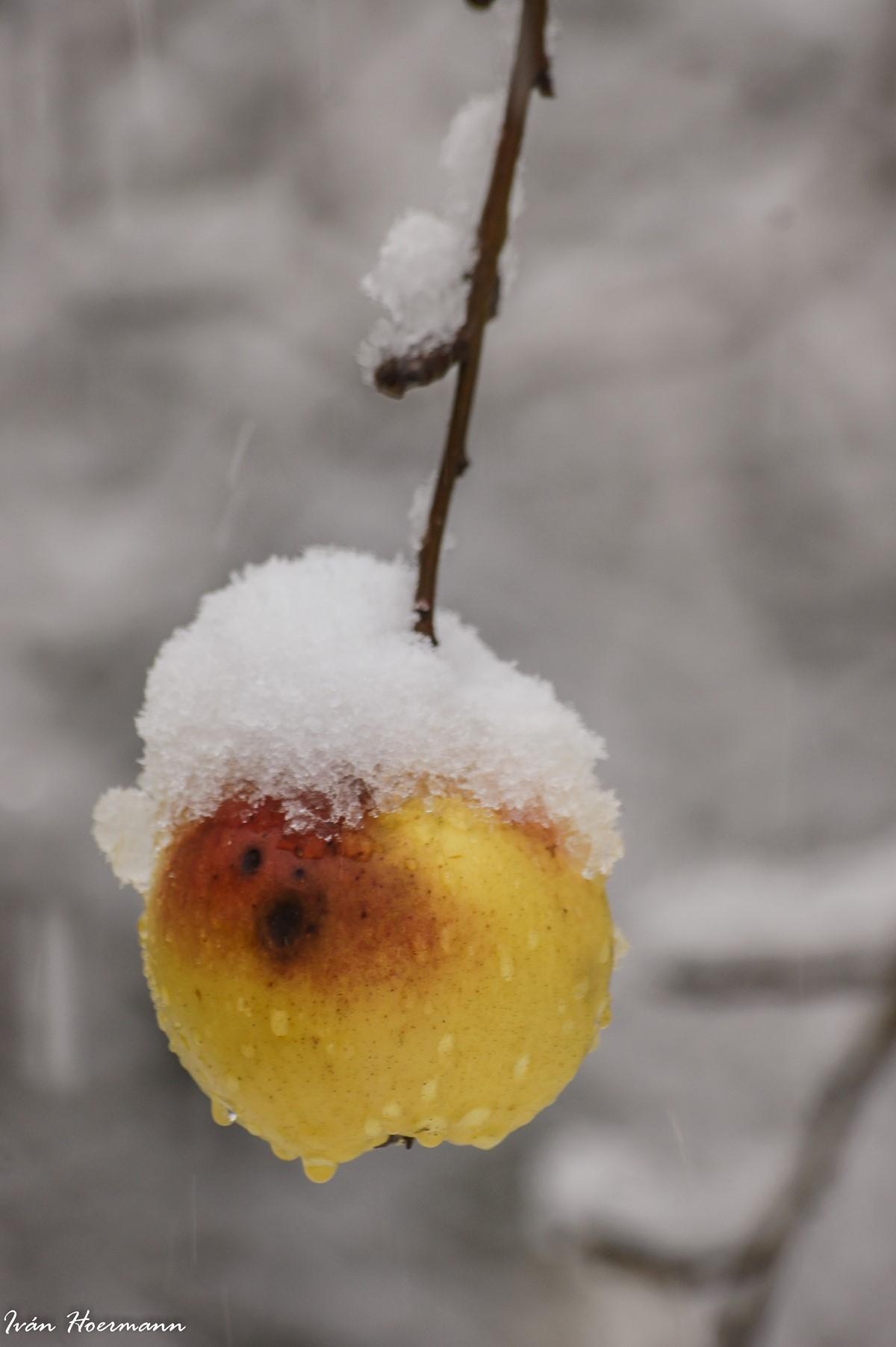 La última manzana