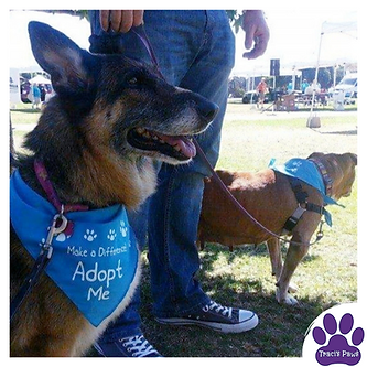 Adoption Even at Traci's Paws Pet Adoption for Lionel's Legacy.