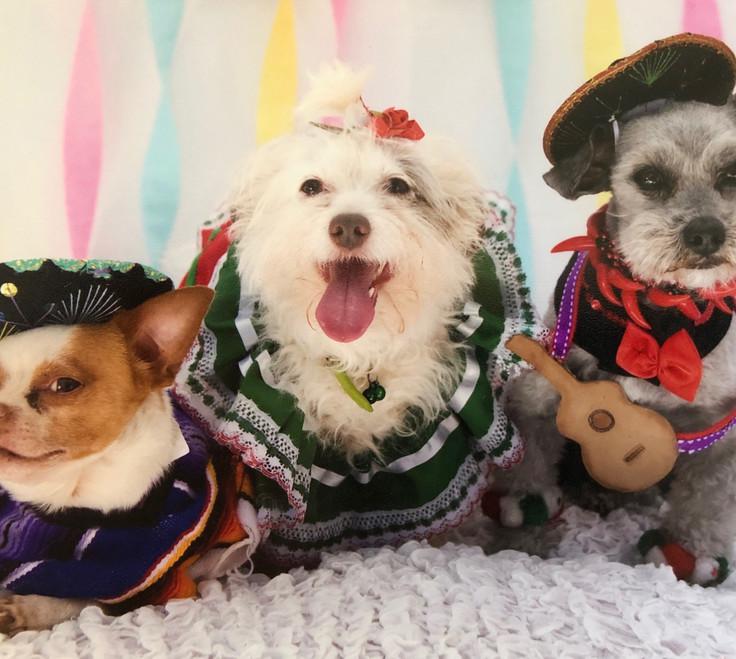 Tres Locos Perros