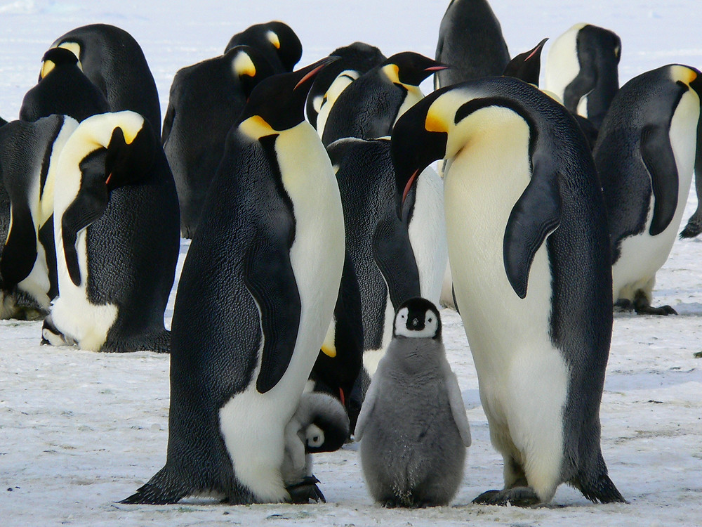 Penguins play a significant role in the ecosystem.