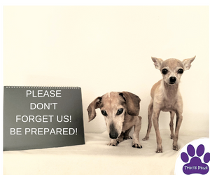Traci's Paws Spokesdogs Lexi and Emee want you to be prepared in the event of a disaster and/or evacuation.