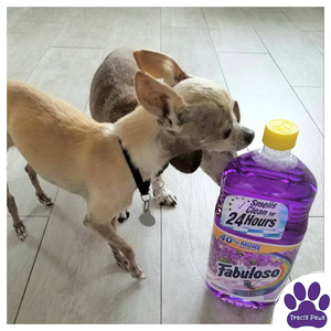 Taking harmful household cleaners out of the home is a great way to prevent your pets from accidental poisoning.