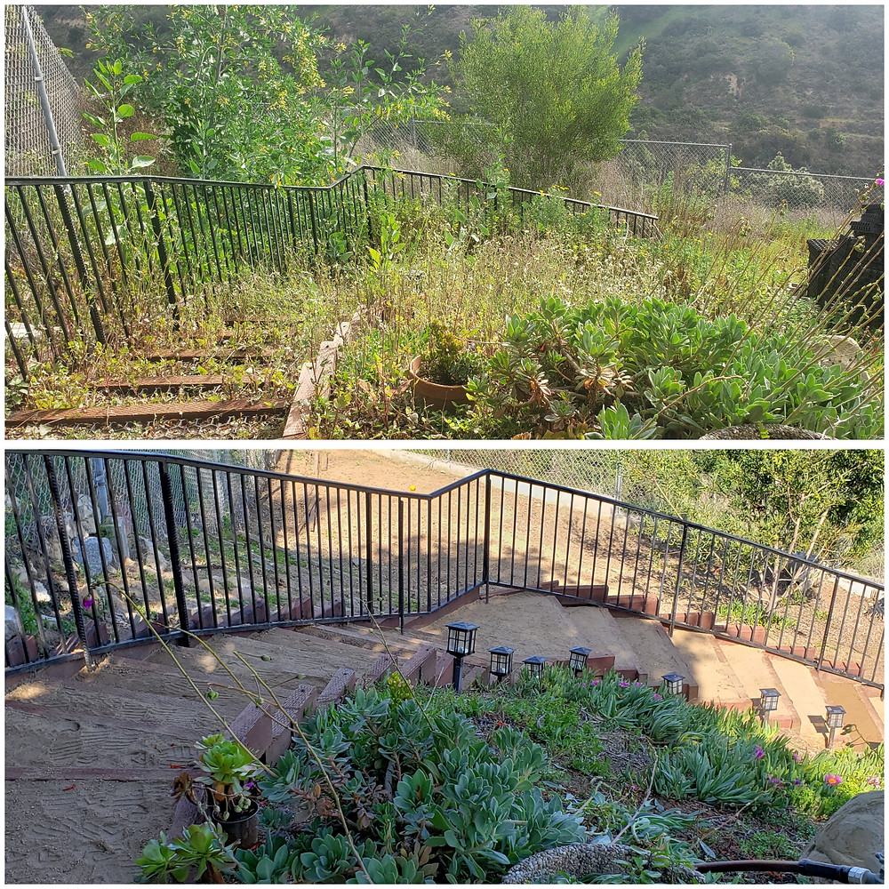 Before & After photo of the weeding of the lower hillside for our yard. Weeding is always done best after a recent rain.