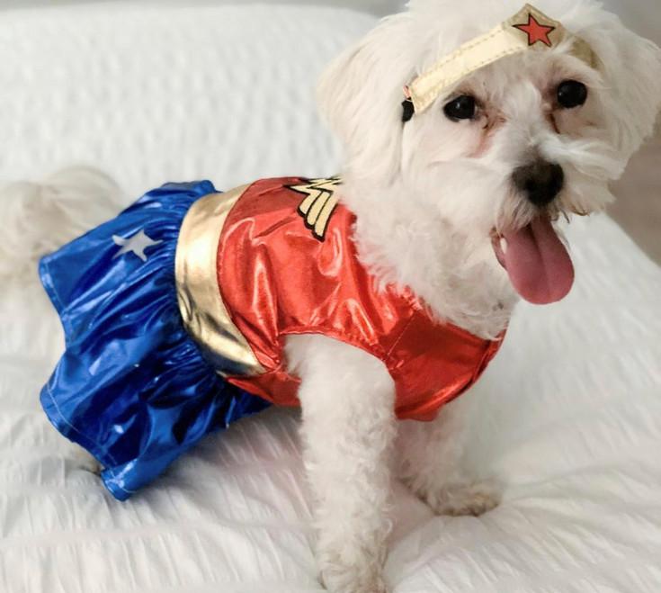 Luna, the Superdog!