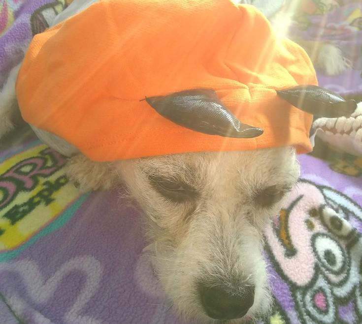 Lola's Halloween Adventure