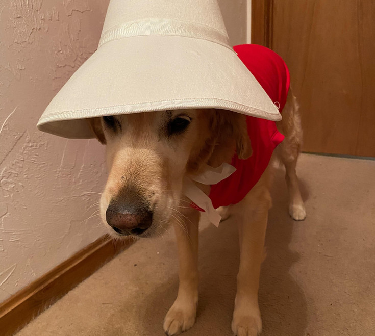 Lucy the Handmaid Pup