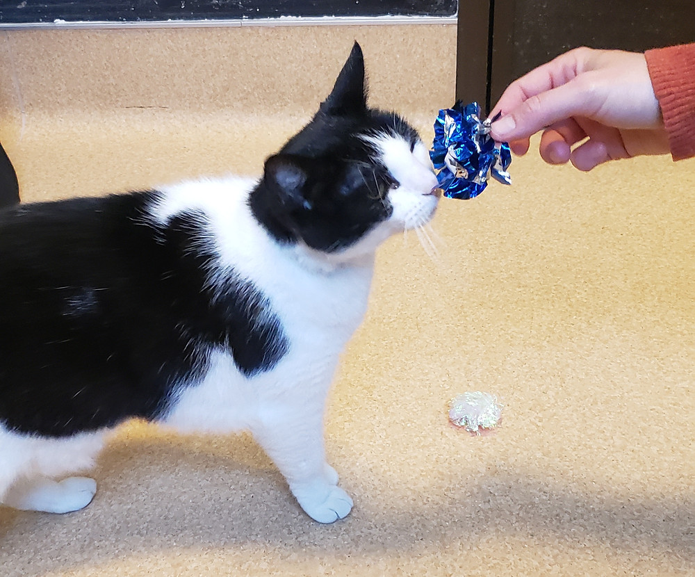 Traci's Paws met a special needs cat, Isabelle, at SDHS.