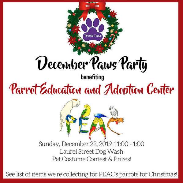 December Paws Party Traci's Paws Parrot