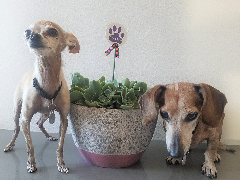 Lexi and Emee with a non-toxic succulent. Traci's Paws The Paws Spot.