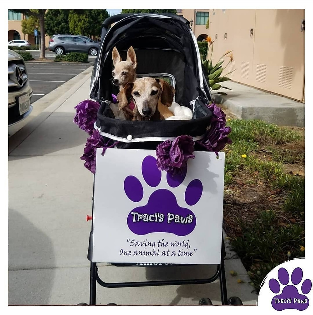 Traci's Paws spokesdogs Lexi and Emee in their stroller.