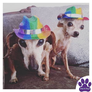 Traci's Paws Spokesdogs Lexi and Emee show their pride with rainbow cowboy hats.