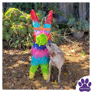 Traci's Paws Spokesdog Emee with her pinata!