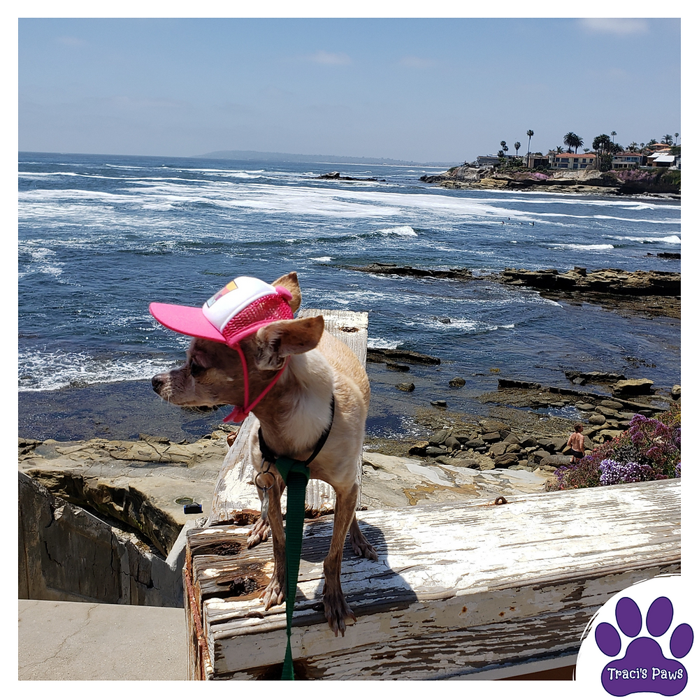 The Paws Spot blog by Traci's Paws provides safety tips on keeping your pets safe during the warmer temps and summertime.