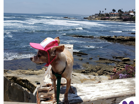 Summertime & Pet Heat Safety