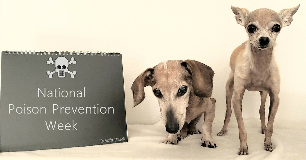 Traci's Paws Spokesdogs Lexi and Emee remind you it's National Poison Prevention Week.