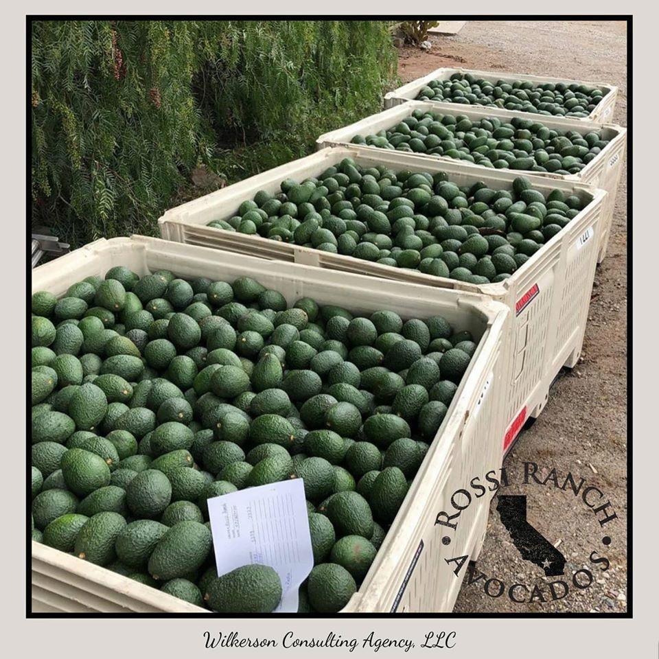 Rossi Ranch Avocados, Wilkerson Consulti