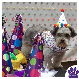Traci's Paws Paws Party, Sir Ruffles Von