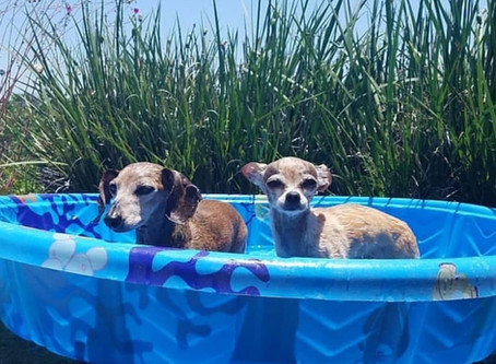 Keep Your Pets Safe in the Heat