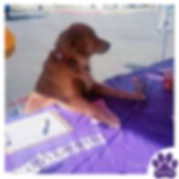 Traci's Paws Pet Hospitality
