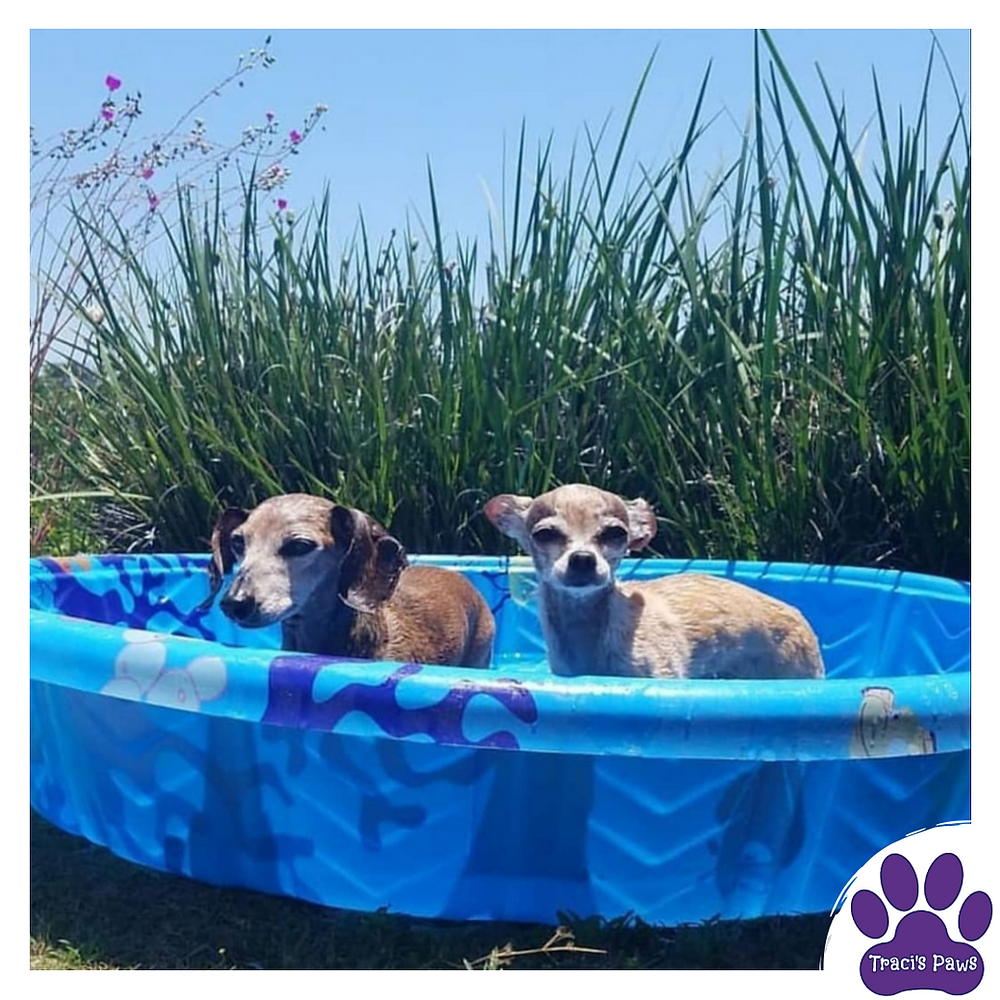 Traci's Paws blog, The Paws Spot provides many easy ways that you can cool off your pets at home without breaking the bank. Use your kid's pool to cool off your pups!