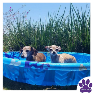 Lexi and Emee take a supervised dip in the kiddie pool to stay cool during the summer.