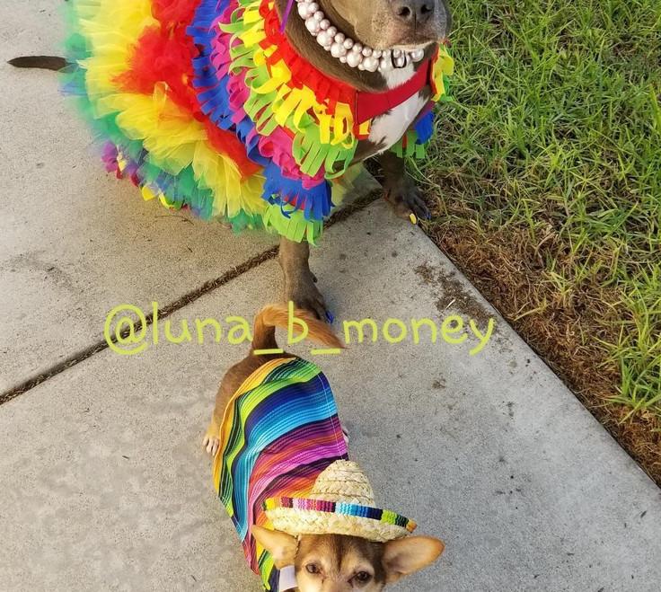 Fiesta with Luna & Tiny Dog