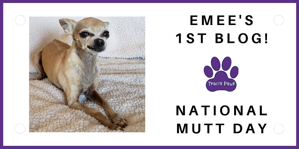 Traci's Paws spokesdog Emee the Chi wrote our blog on National Mutt Day!