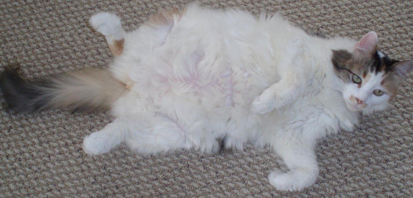 Tabitha, one fat cat!