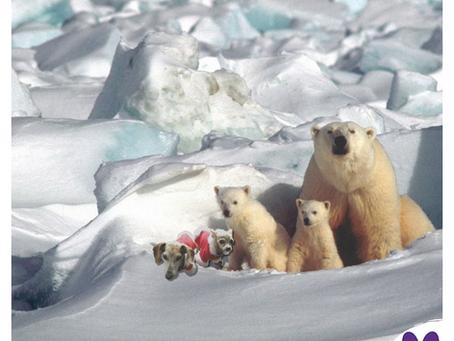 National Polar Bear Day