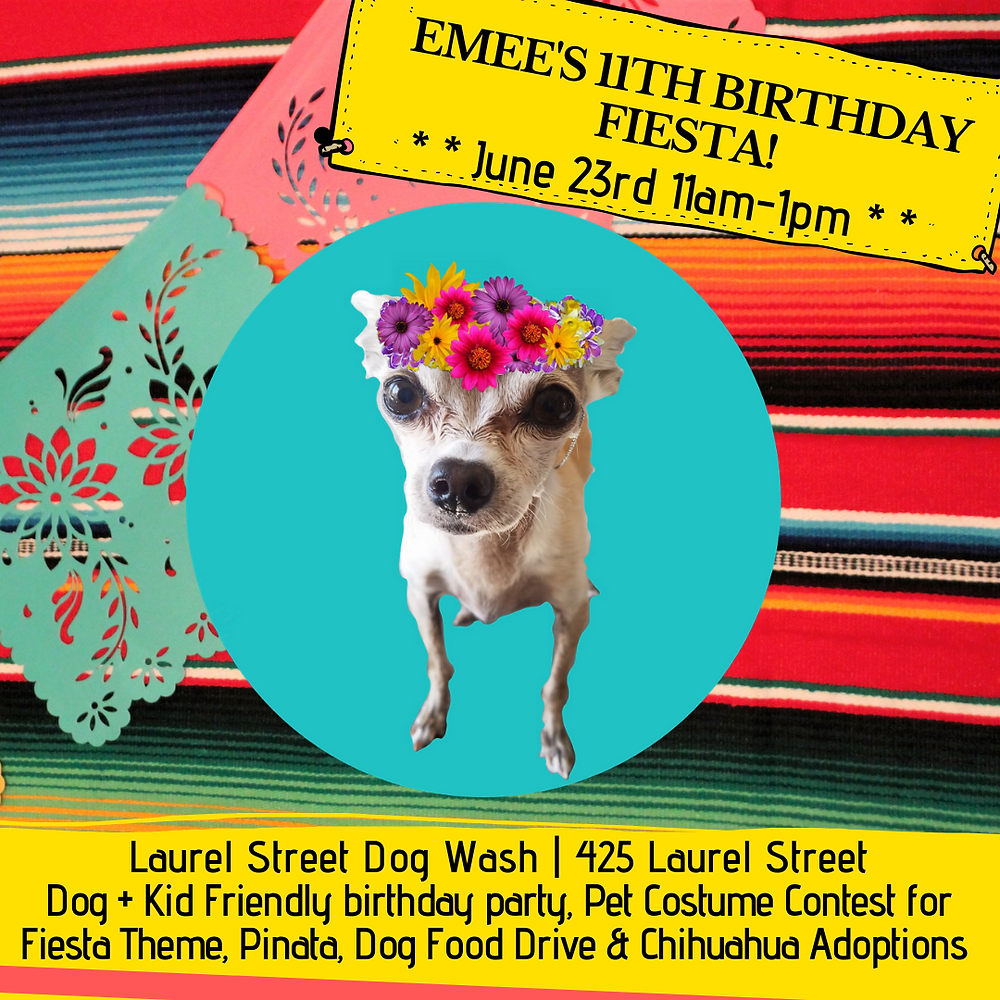 Traci's Paws Spokesdog Emee's 11th Birthday Fiesta Party Invitation