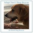 Adopt Don't Shop Rescue Wilkerson Consul