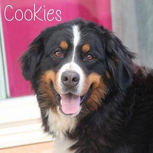 pc-cookies.jpg