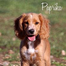 PC Paprika.jpg