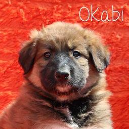 pc-okabi.jpg