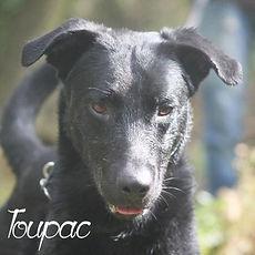 pc-toupac-2.jpg