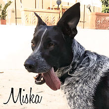 PC Miska 01.jpg