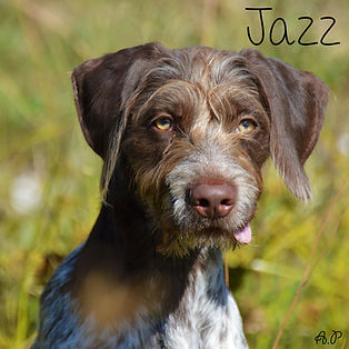pc-jazz.jpg