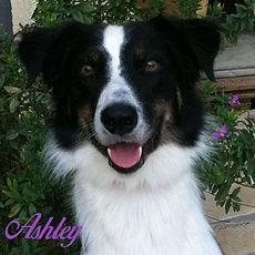ashley-site-1.jpg