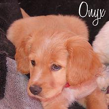 PC Onyx.jpg