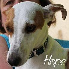 pc-hope.jpg