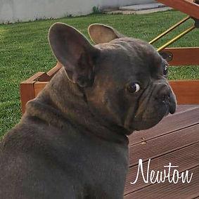 PC Newton 01.jpg