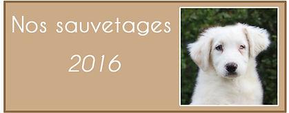 Merveille 2016 V2.jpg