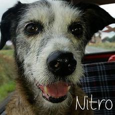 pc-nitro.jpg