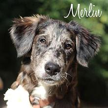 PC Merlin 02.jpg